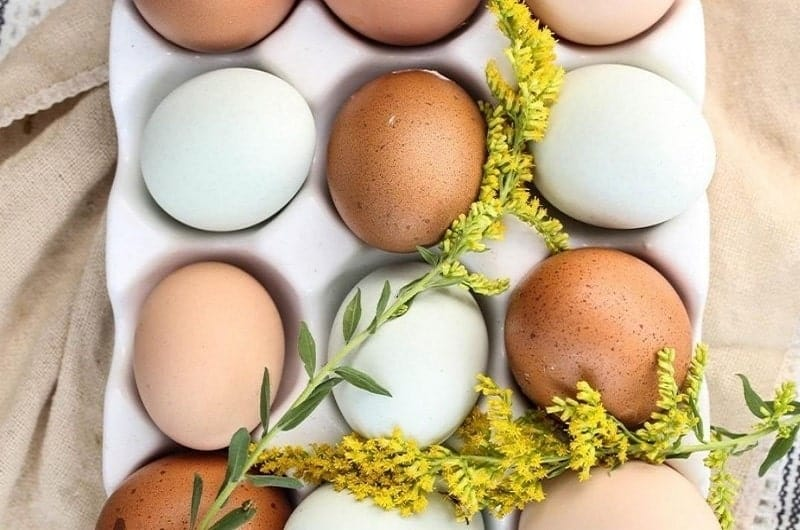 Are Egg Whites Good For Weight Loss? Forget The Yolk, Seriously!